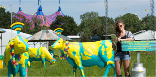 WiFI cows at Glasto
