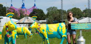WiFI cows at Glasto